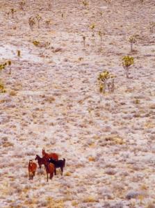 Wild Mustangs - Nevada
