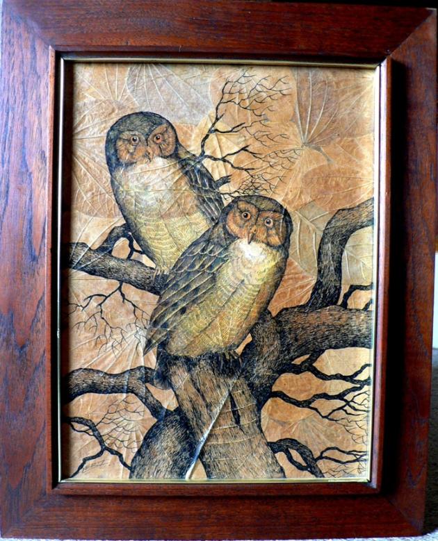 Lert owlsLR NZ