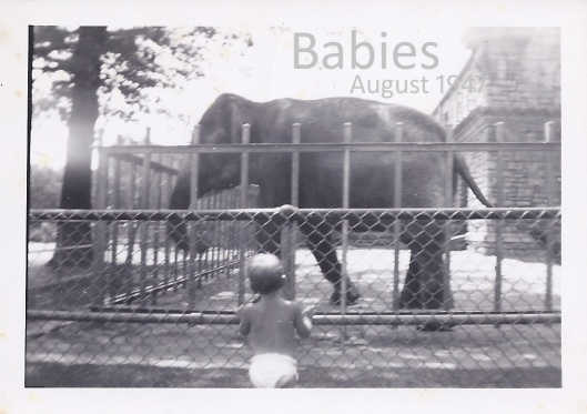 baby elephant aug 1947 copy1