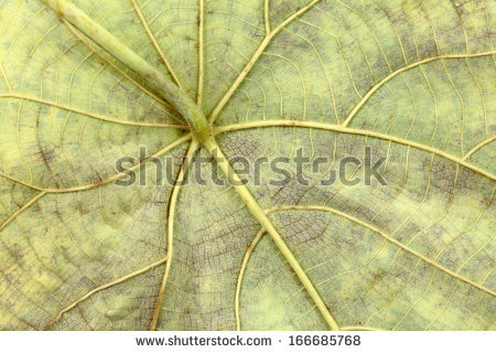 stock-photo-closeup-of-a-decaying-green-leaf-166685768