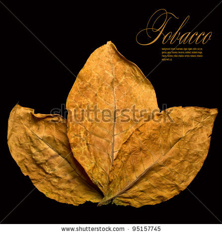 stock-photo-dry-leafs-tobacco-closeup-on-the-black-background-95157745