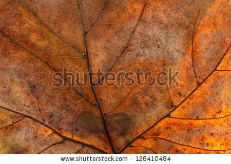 stock-photo-photo-of-dry-cracked-list-with-lots-of-detail-good-for-background-128410484